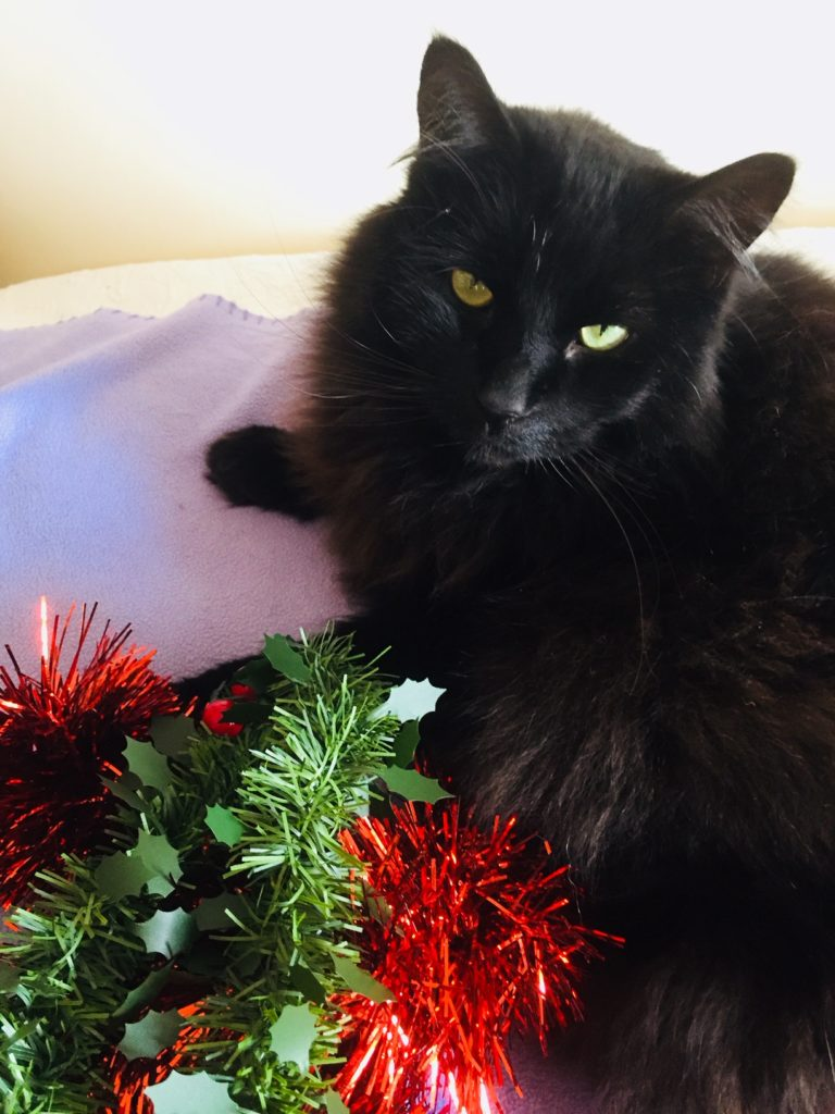 black cat and Christmas decorations